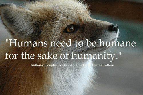 """Memes, Humanity, and 🤖: """"Humans need to be humane  for the sake of humanity.""""  Anthony Douglas Williams Inside he Divine Pattern"""