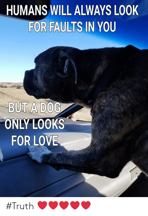 Love, Memes, and Truth: HUMANS WILL ALWAYS LOOK  FOR FAULTS IN YOU  BUT A DOG  ONLY LOOKS  FOR LOVE #Truth ❤️❤️❤️❤️❤️