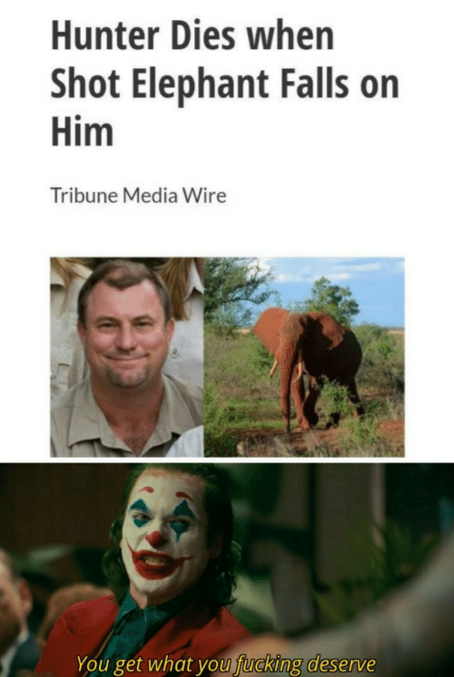 Fucking, Elephant, and Media: Hunter Dies when  Shot Elephant Falls on  Him  Tribune Media Wire  You get what you fucking deserve