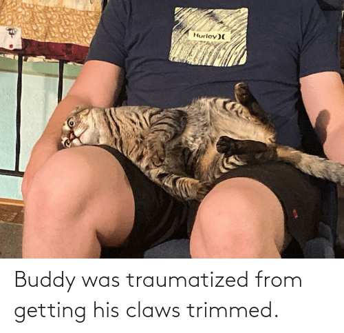 Hurley, Buddy, and  Claws: Hurley)( Buddy was traumatized from getting his claws trimmed.