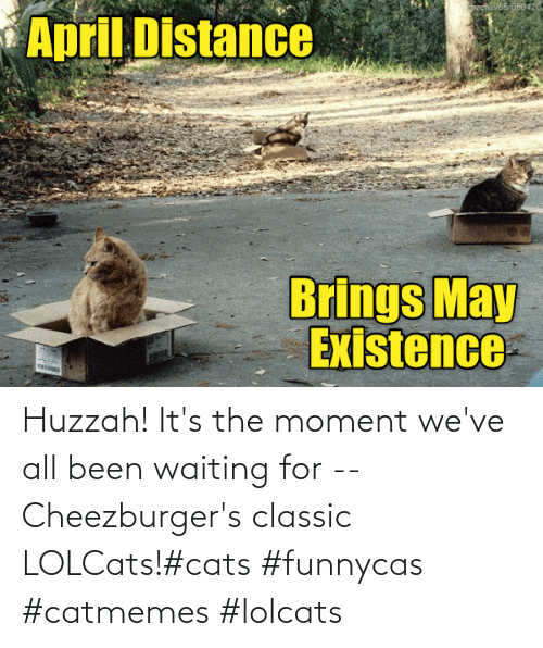 Waiting For: Huzzah! It's the moment we've all been waiting for -- Cheezburger's classic LOLCats!#cats #funnycas #catmemes #lolcats