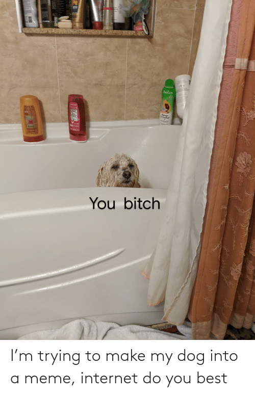 Make My: I'm trying to make my dog into a meme, internet do you best