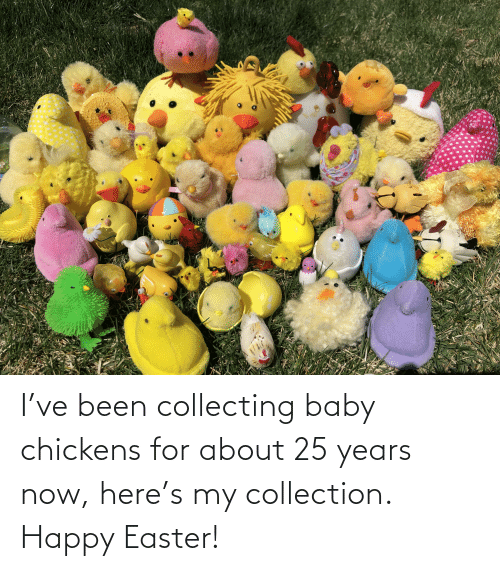 Collecting: I've been collecting baby chickens for about 25 years now, here's my collection. Happy Easter!