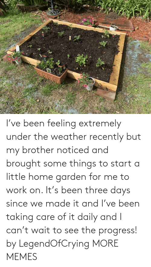 For Me: I've been feeling extremely under the weather recently but my brother noticed and brought some things to start a little home garden for me to work on. It's been three days since we made it and I've been taking care of it daily and I can't wait to see the progress! by LegendOfCrying MORE MEMES