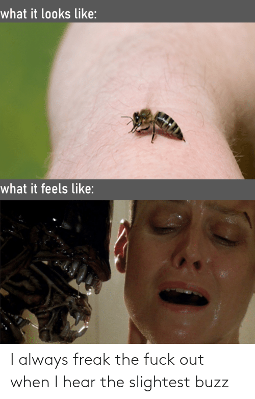 Fuck Out: I always freak the fuck out when I hear the slightest buzz