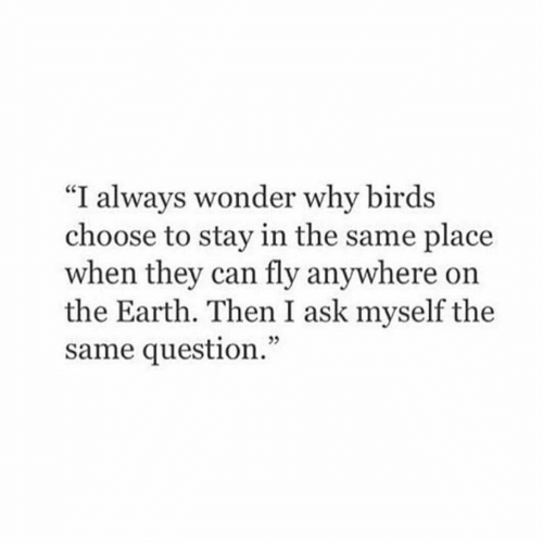 "Stay In: ""I always wonder why birds  choose to stay in the same place  when they can fly anywhere on  the Earth. Then I ask myself the  same question."""