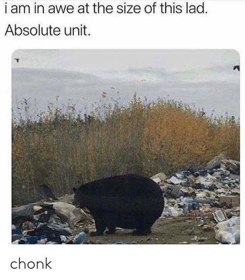 Chonk: i am in awe at the size of this lad.  Absolute unit. chonk
