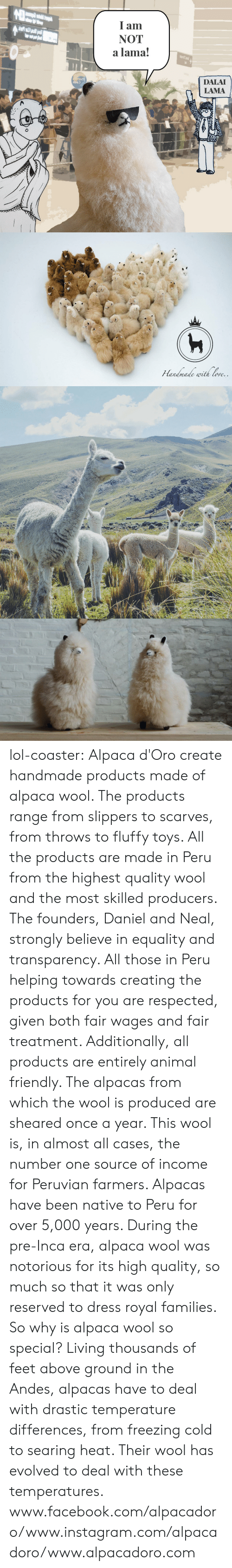 Ored: I am  NOT  a lama!  DALAI  LAMA   ore lol-coaster:    Alpaca d'Oro create handmade products made of alpaca wool. The products range from slippers to scarves, from throws to fluffy toys. All the products are made in Peru from the highest quality wool and the most skilled producers. The founders, Daniel and Neal, strongly believe in equality and transparency. All those in Peru helping towards creating the products for you are respected, given both fair wages and fair treatment. Additionally, all products are entirely animal friendly. The alpacas from which the wool is produced are sheared once a year. This wool is, in almost all cases, the number one source of income for Peruvian farmers. Alpacas have been native to Peru for over 5,000 years. During the pre-Inca era, alpaca wool was notorious for its high quality, so much so that it was only reserved to dress royal families. So why is alpaca wool so special? Living thousands of feet above ground in the Andes, alpacas have to deal with drastic temperature differences, from freezing cold to searing heat. Their wool has evolved to deal with these temperatures.     www.facebook.com/alpacadoro/www.instagram.com/alpacadoro/www.alpacadoro.com