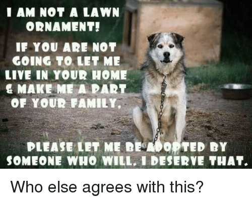Family, Memes, and Ted: I AM NOT A LAWN  ORNAMENT!  IF YOU AR NOT  GOING TO LET ME  LIVE IN YOUR HOME  & MAKE ME A PART  OF YOUR FAMILY,  PLEASE LET ME DEMO。 TED DY  SOMEONE WHO WILL, I DESERVE THAT. Who else agrees with this?