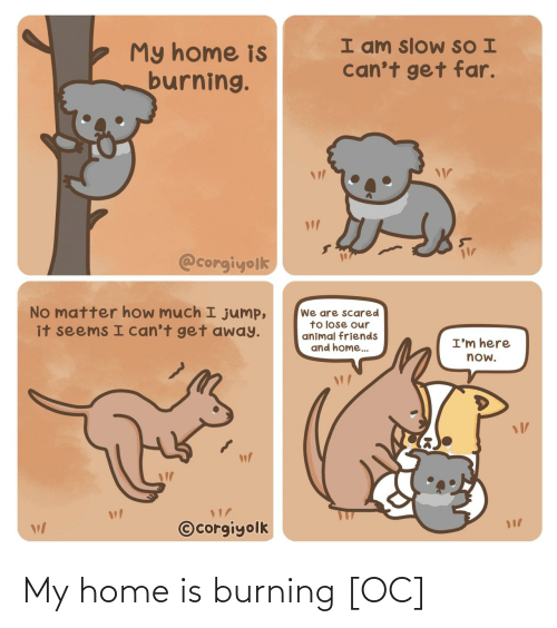 So I: I am slow SO I  can't get far.  My home is  burning.  @corgiyolk  No matter how much I jump,  it seems I can't get away.  We are scared  to lose our  animal friends  and home..  I'm here  now.  ©corgiyolk My home is burning [OC]