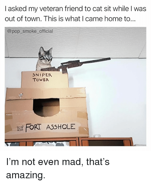 Offical: I asked my veteran friend to cat sit while I was  out of town. This is what I came home to.  @pop smoke offical  5NIPE  TOWER  FORT ASSHOLE I'm not even mad, that's amazing.