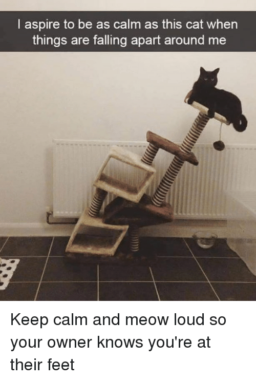 Keep Calms: I aspire to be as calm as this cat when  things are falling apart around me Keep calm and meow loud so your owner knows you're at their feet