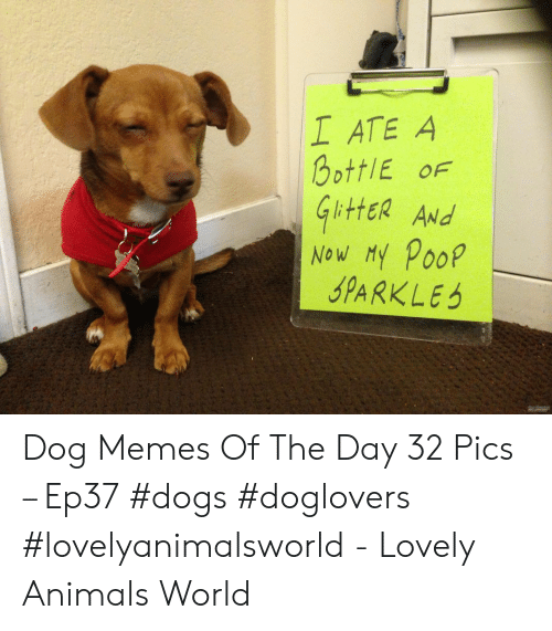 Animals, Dogs, and Memes: I ATE A  OottIE OF  ittER ANd  Now My Poop  SPARKLES Dog Memes Of The Day 32 Pics – Ep37 #dogs #doglovers #lovelyanimalsworld - Lovely Animals World