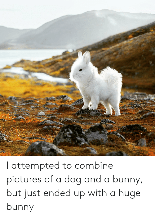 Pictures, Dog, and Bunny: I attempted to combine pictures of a dog and a bunny, but just ended up with a huge bunny