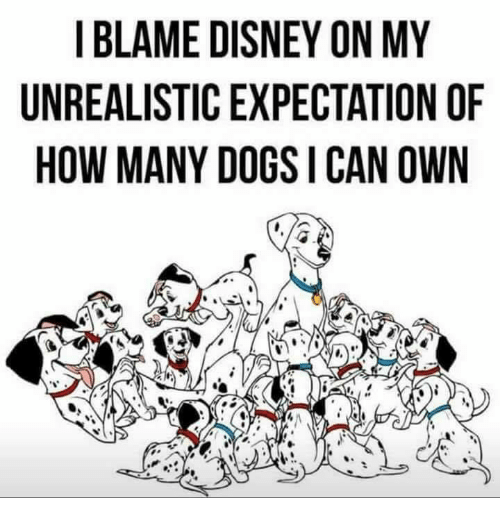 Disney, Dogs, and Memes: I BLAME DISNEY ON MY  UNREALISTIC EXPECTATION OF  HOW MANY DOGS I CAN OWN