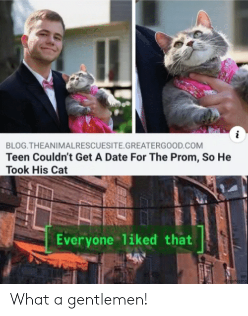 Blog, Date, and Cat: i  BLOG.THEANIMALRESCUESITE.GREATERGOOD.COM  Teen Couldn't Get A Date For The Prom, So He  Took His Cat  Everyone liked that  240  Frealfeeling What a gentlemen!