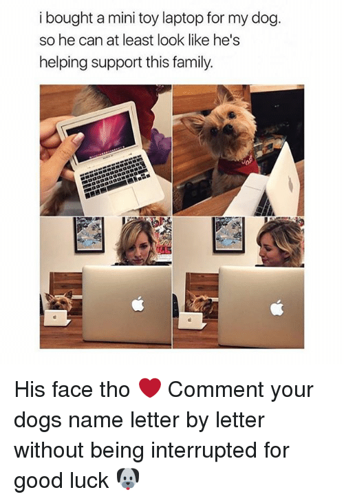 Commentator: i bought a mini toy laptop for my dog.  so he can at least look like he's  helping support this family. His face tho ❤️ Comment your dogs name letter by letter without being interrupted for good luck 🐶
