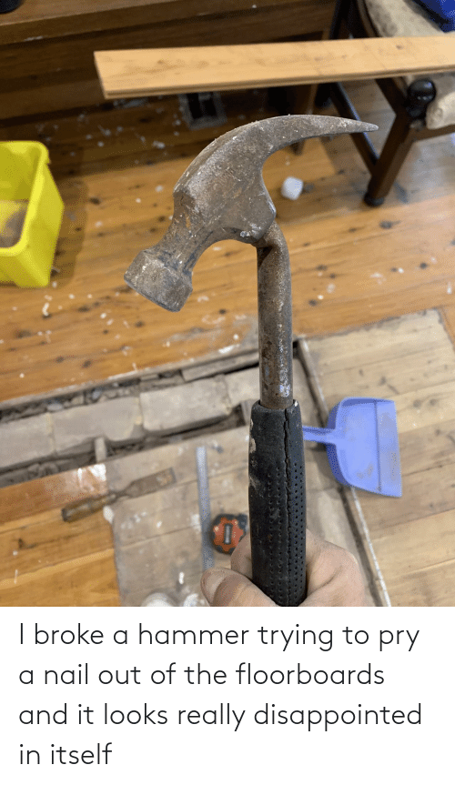 Trying: I broke a hammer trying to pry a nail out of the floorboards and it looks really disappointed in itself