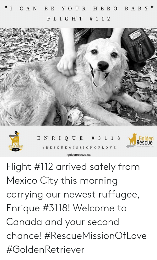 """Memes, Yo, and Canada: """" I C A N B E YO U R HE R O B A B Y'  FLIGHT #112  Golden  Rescue  ENRIQUE #3118  #112  RESCUE MISssIOn  #RESCUEMISSIONOFLOVE  OF LOJ  goldenrescue.ca Flight #112 arrived safely from Mexico City this morning carrying our newest ruffugee, Enrique #3118! Welcome to Canada and your second chance!  #RescueMissionOfLove #GoldenRetriever"""