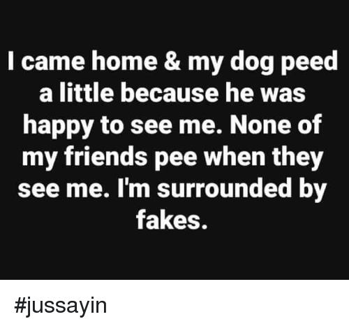 Dank, Friends, and Happy: I came home & my dog peed  a little because he was  happy to see me. None of  my friends pee when they  see me. I'm surrounded by  fakes. #jussayin