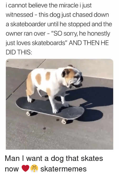"Sorry, Skate, and Dog: i cannot believe the miracle i just  witnessed - this dog just chased down  a skateboarder until he stopped and the  owner ran over - ""SO sorry, he honestly  just loves skateboards"" AND THEN HE  DID THIS: Man I want a dog that skates now ❤️😤 skatermemes"