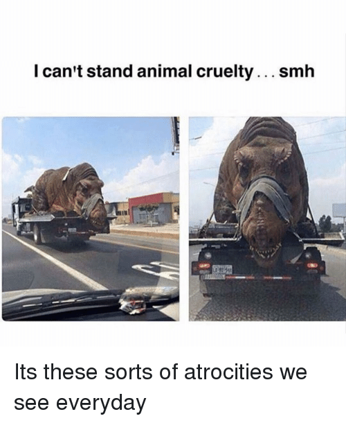 Memes, Smh, and Animal: I can't stand animal cruelty... smh Its these sorts of atrocities we see everyday