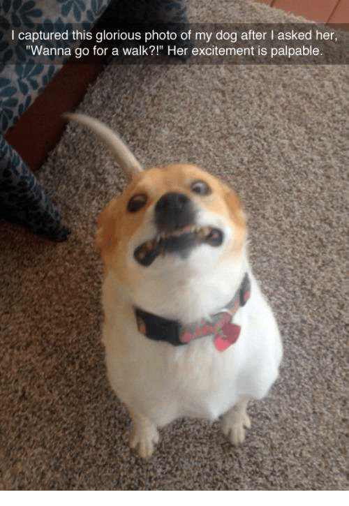 """Wanna Go For A Walk: I captured this glorious photo of my dog after lasked her,  """"Wanna go for a walk?"""" Her excitement is palpable."""