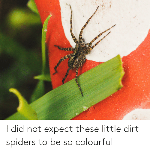 Spiders: I did not expect these little dirt spiders to be so colourful