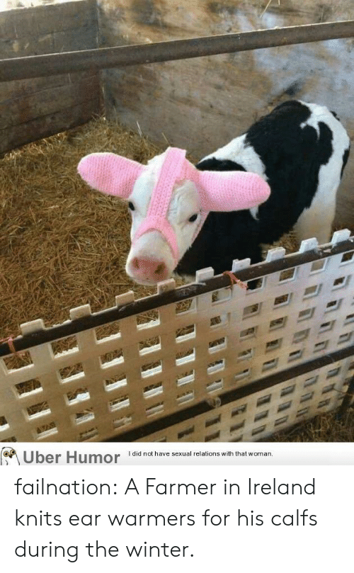 Farmer: I did not have sexual relations with that  Uber Humor  woman. failnation:  A Farmer in Ireland knits ear warmers for his calfs during the winter.