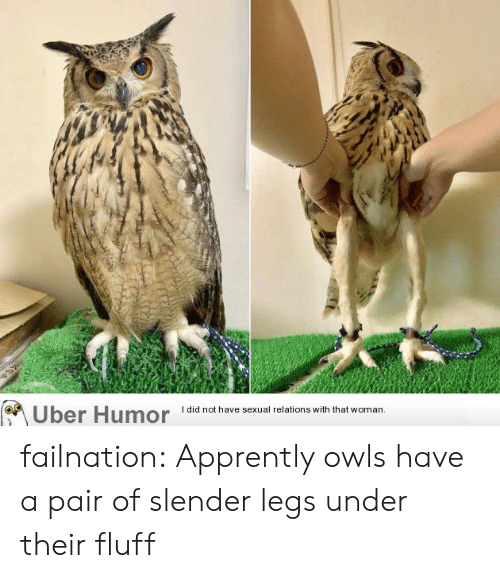 owls: I did not have sexual relations with that woman.  Uber Humor failnation:  Apprently owls have a pair of slender legs under their fluff