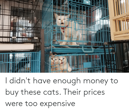 Too Expensive: I didn't have enough money to buy these cats. Their prices were too expensive