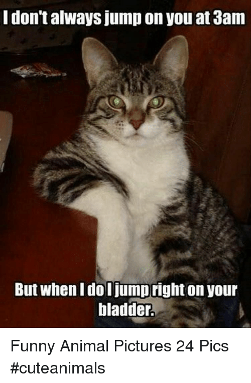 Funny, Animal, and Pictures: I don't always jump on you at 3am  But when I do I jumpright on your  bladder. Funny Animal Pictures 24 Pics #cuteanimals