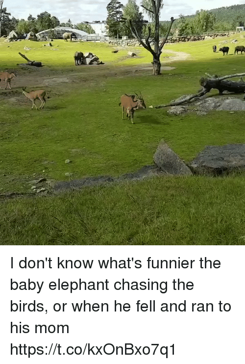 Baby Elephant: I don't know what's funnier the baby elephant chasing the birds, or when he fell and ran to his mom https://t.co/kxOnBxo7q1