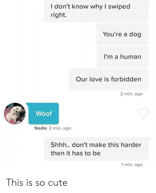 Nadia: I don't know why I swiped  right.  You're a dog  I'm a human  Our love is forbidden  2 min. ago  Woof  Nadia 2 min. ago  Shh... don't make this harder  then it has to be  1 min. ago This is so cute