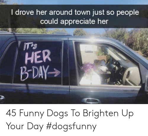 Dogs, Funny, and Appreciate: I drove her around town just so people  could appreciate her  ITTS  HER 45 Funny Dogs To Brighten Up Your Day #dogsfunny