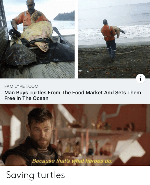 Food, Free, and Heroes: i  FAMILYPET.COM  Man Buys Turtles From The Food Market And Sets Them  Free In The Ocean  Because that's what heroes do. Saving turtles