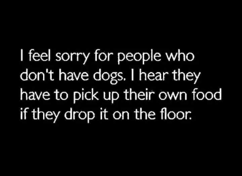Dogs, Food, and Memes: I feel sorry for people who  don't have dogs. I hear they  have to pick up their own food  if they drop it on the floor.