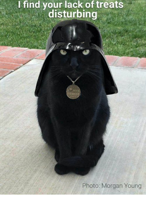 I Find Your Lack Of: I find your lack of treats  disturbing  Photo: Morgan Young