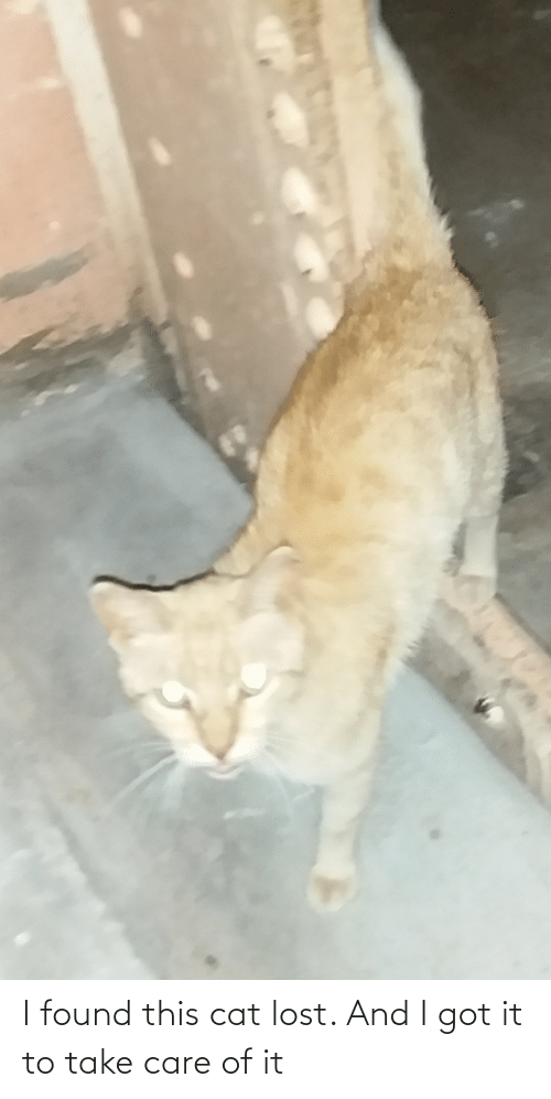 take care: I found this cat lost. And I got it to take care of it