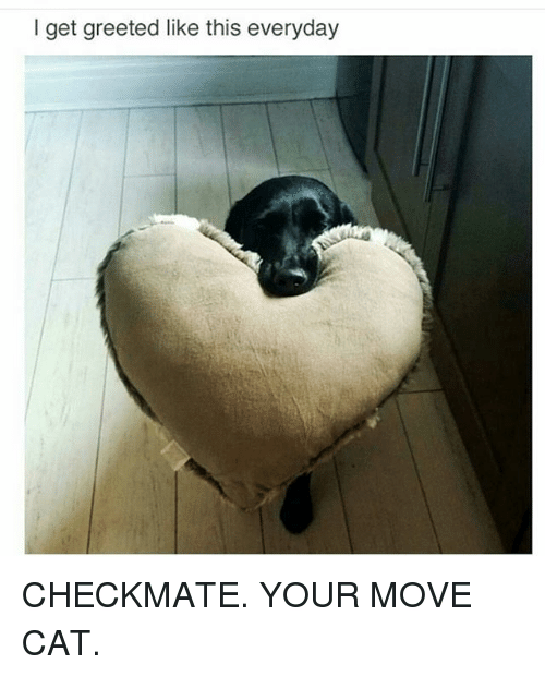 Your Moves: I get greeted like this everyday CHECKMATE. YOUR MOVE CAT.