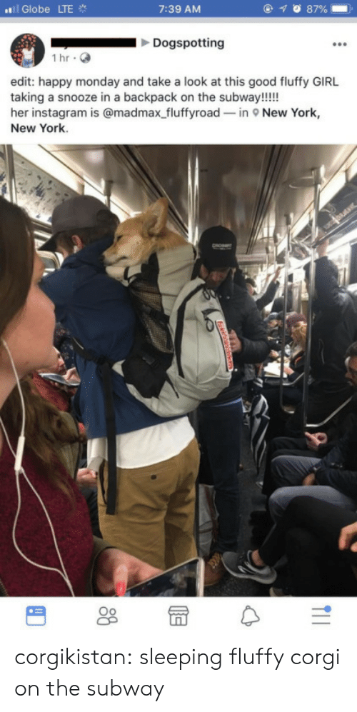 new york new york: ../i Globe LTE  7:39 AM  Dogspotting  İhr.  edit: happy monday and take a look at this good fluffy GIRL  taking a snooze in a backpack on the subway!!!!  her instagram is @madmax fluffyroad-in New York,  New York. corgikistan:  sleeping fluffy corgi on the subway