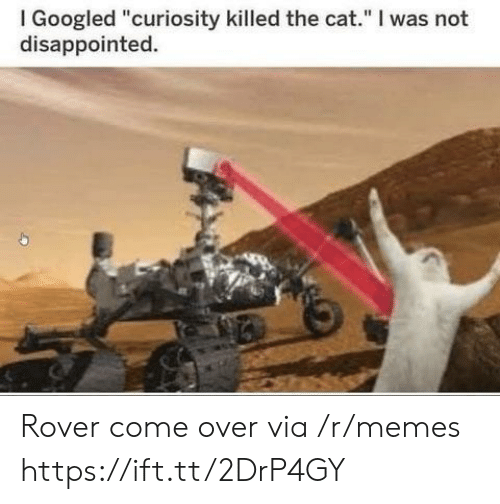 """curiosity killed the cat: I Googled """"curiosity killed the cat."""" I was not  disappointed. Rover come over via /r/memes https://ift.tt/2DrP4GY"""