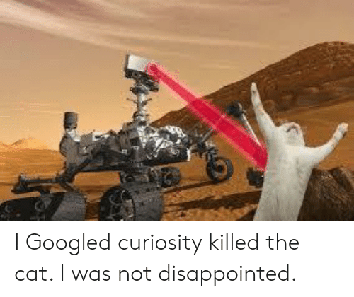 curiosity killed the cat: I Googled curiosity killed the cat. I was not disappointed.