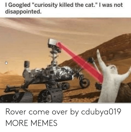 """curiosity killed the cat: I Googled """"curiosity killed the cat."""" I was not  disappointed. Rover come over by cdubya019 MORE MEMES"""
