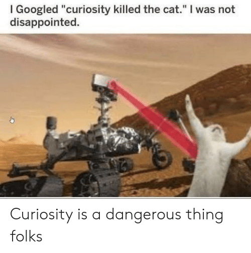 """Disappointed, Cat, and Thing: I Googled """"curiosity killed the cat."""" I was not  disappointed. Curiosity is a dangerous thing folks"""