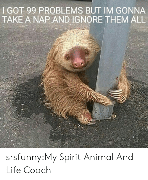 99 Problems: I GOT 99 PROBLEMS BUT IM GONNA  TAKE A NAP AND IGNORE THEM ALL srsfunny:My Spirit Animal And Life Coach
