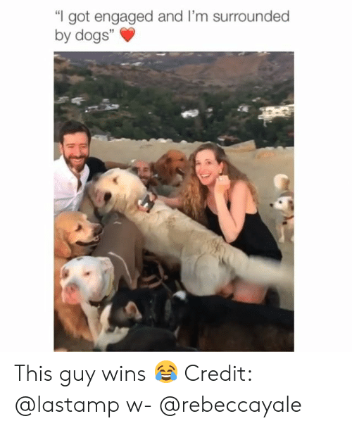 "Dogs, Memes, and 🤖: I got engaged and I'm surrounded  by dogs""  3 This guy wins 😂 Credit: @lastamp w- @rebeccayale"