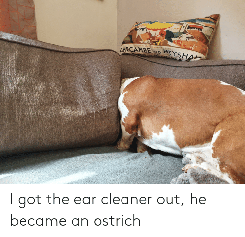 cleaner: I got the ear cleaner out, he became an ostrich