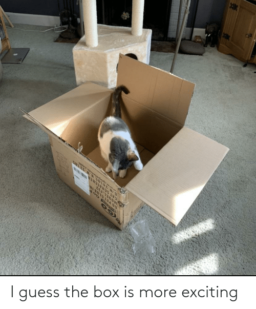 exciting: I guess the box is more exciting