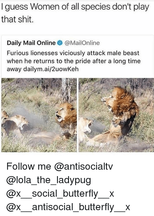 Memes, Shit, and Butterfly: I guess Women of all species don't play  that shit  Daily Mail Online @MailOnline  Furious lionesses viciously attack male beast  when he returns to the pride after a long time  away dailym.ai/2uowKeh Follow me @antisocialtv @lola_the_ladypug @x__social_butterfly__x @x__antisocial_butterfly__x